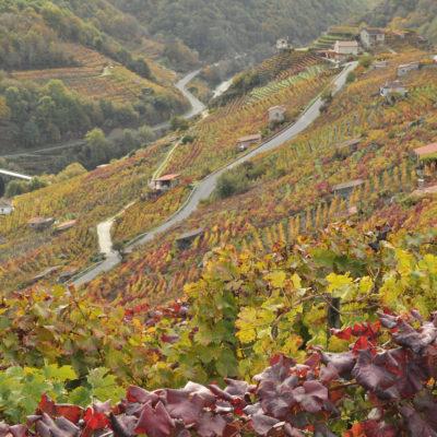 Enoturismo, visita a viñedos